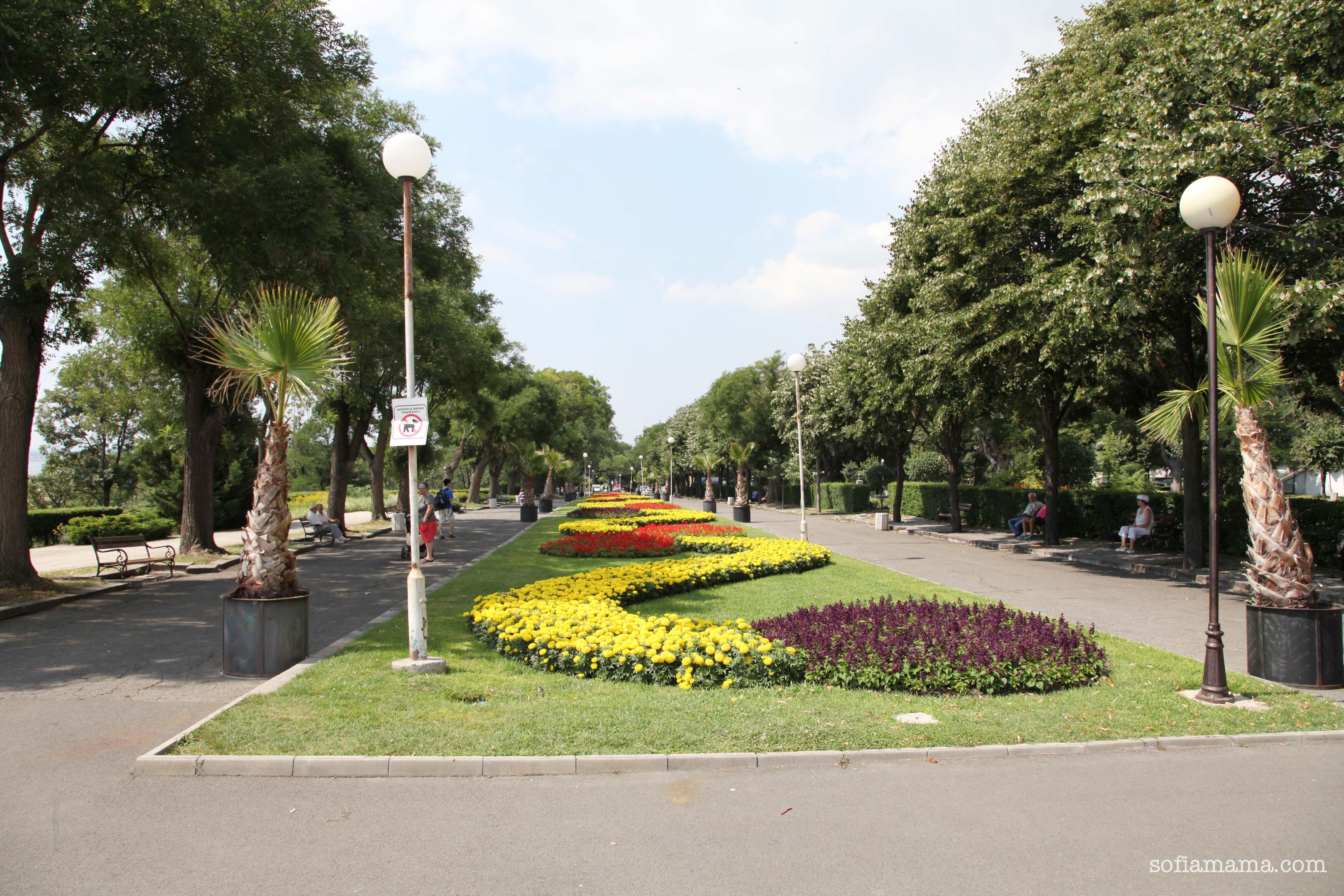 cvetia2