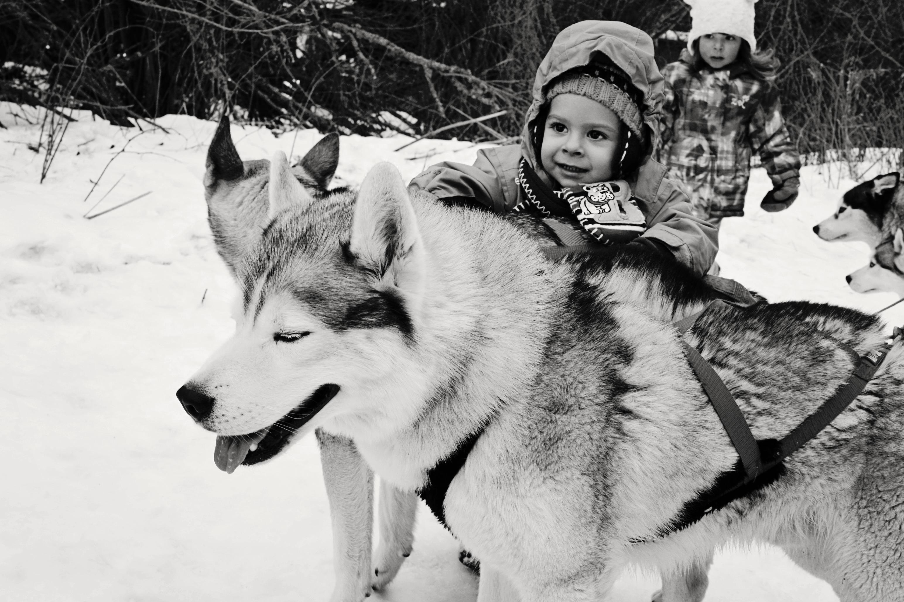 boyanddog2