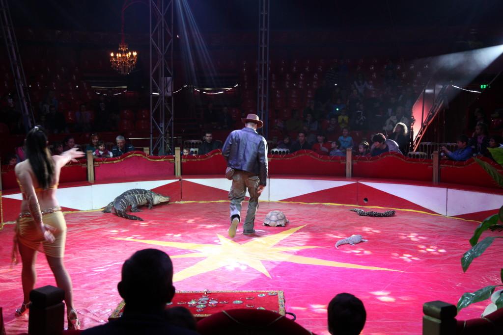 Змии, костенурка и крокодил бяха част от представлението